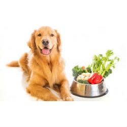 Dog Health Plans